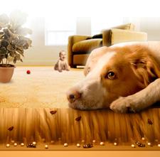 Vlooien bij hond en kat