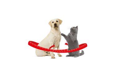 Overgewicht: is uw hond, poes of kat te zwaar?