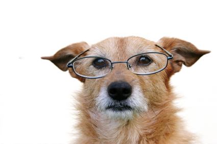 Senioren check oude hond, poes of kat
